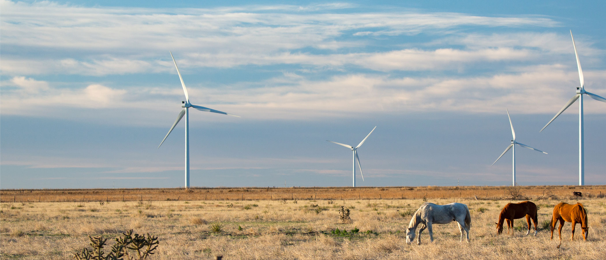 Horses graze in a field with wind turbines in the distance.