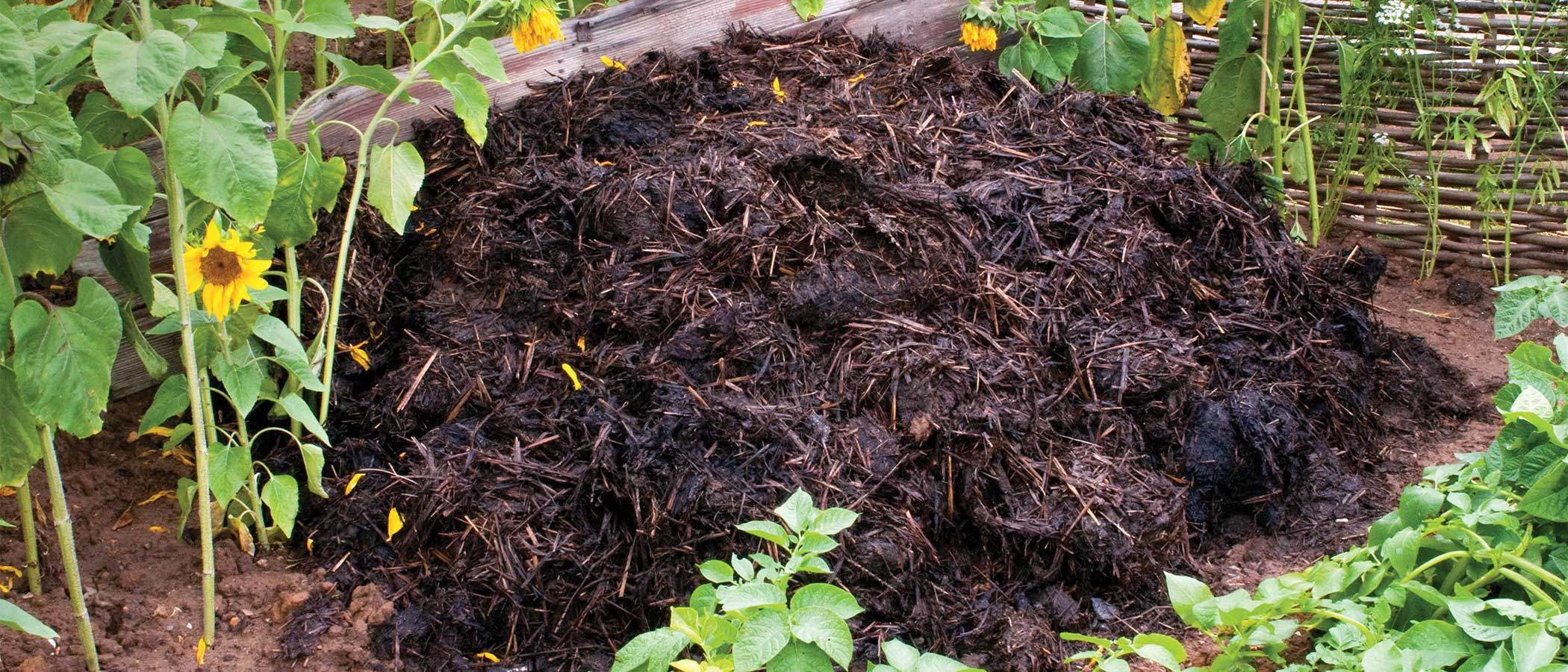 Compost pile in a home garden.