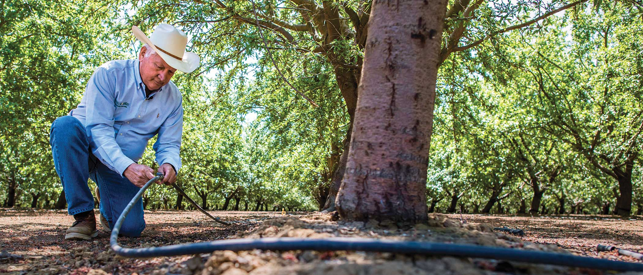 Joe Del Bosque, president of Del Bosque Farms, Inc., inspects a water hose used for drip irrigation in his almond orchard in Firebaugh, California.