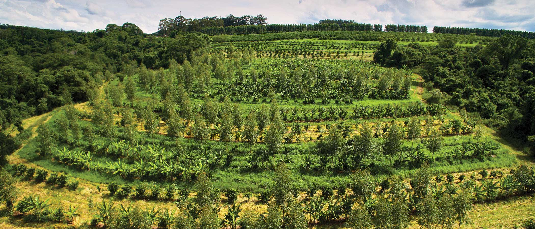 Hillside of a farm employing regenerative farming and agroforestry practices.