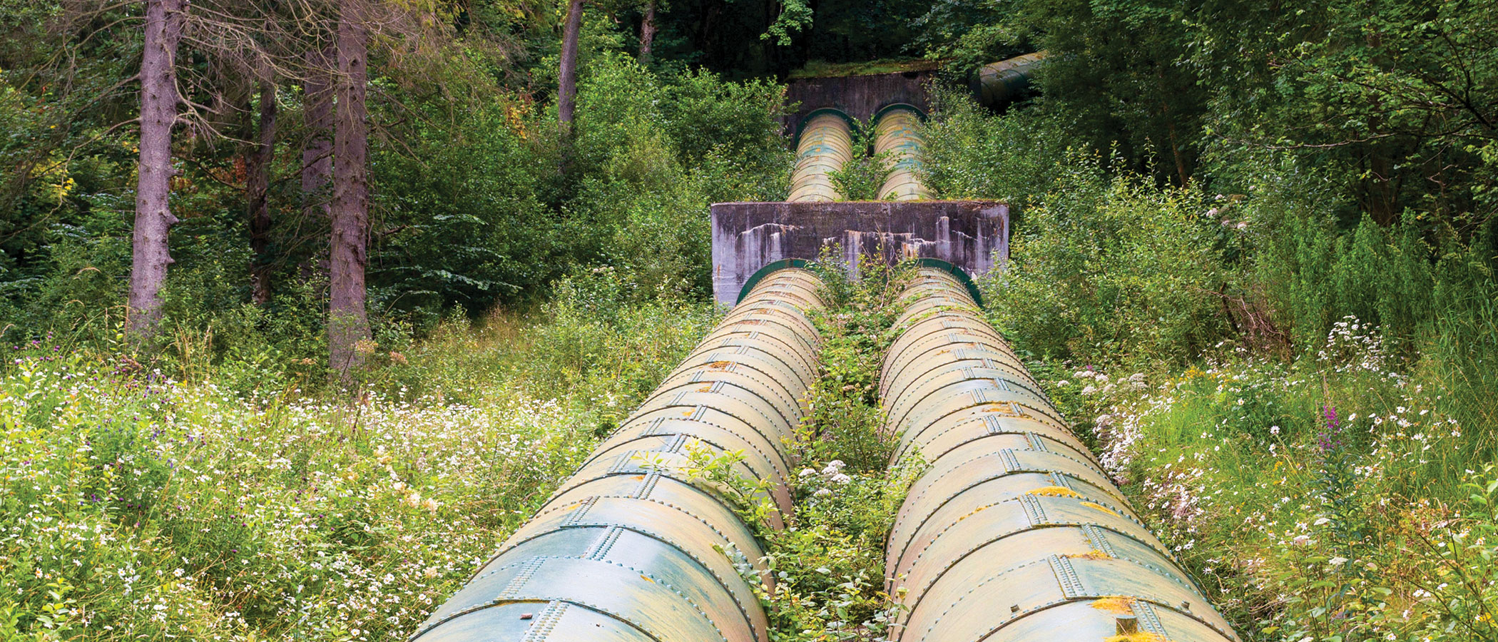 Water distribution pipes running through a lush field of wild flowers.