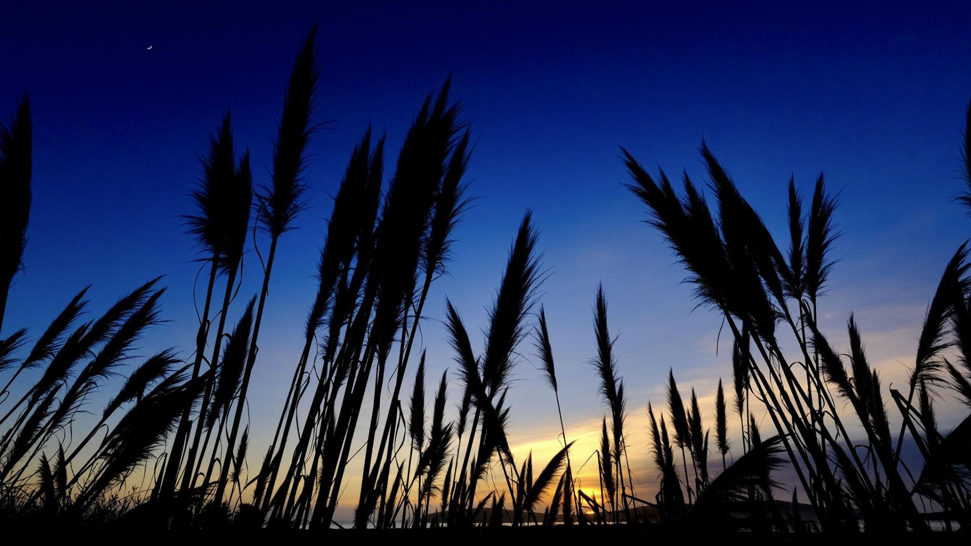 California coast and sunset
